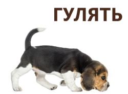 Куртки и комбинезоны для собак
