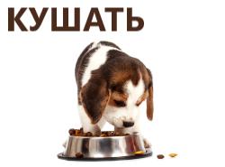 Сухие и влажные корма для собак