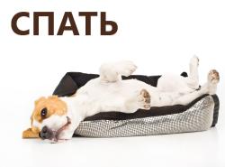 Лежаки и кровати для собак