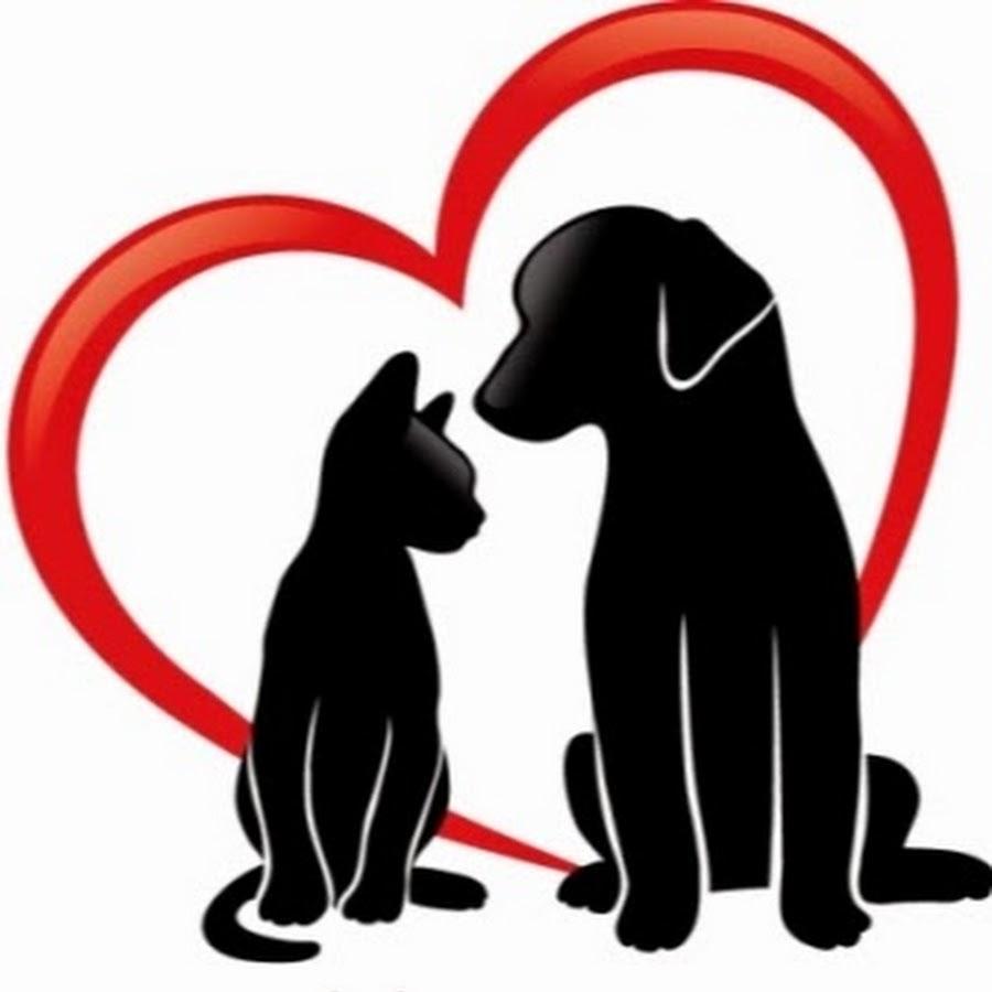 Передержка для кошек и собак