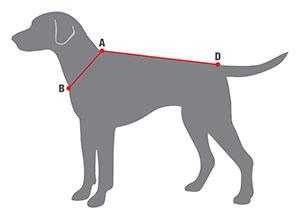 Инструкция для снятия мерки с собаки